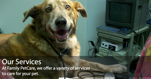 Veterinarian And Animal Hospital In Fort Worth Tx